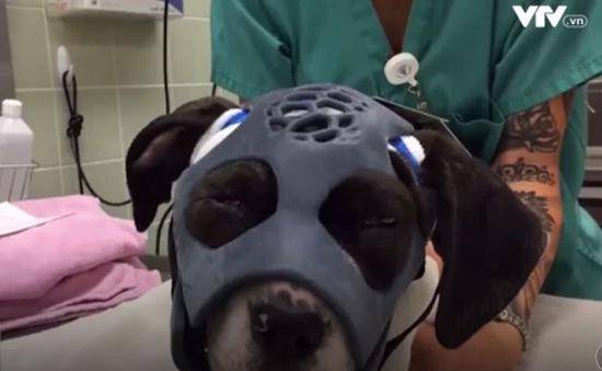 Mũ in 3D dành cho động vật sau phẫu thuật