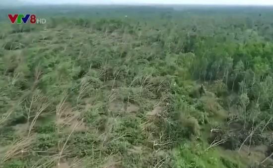 Quảng Bình cần chuyển đổi cây trồng để thích ứng biến đổi khí hậu