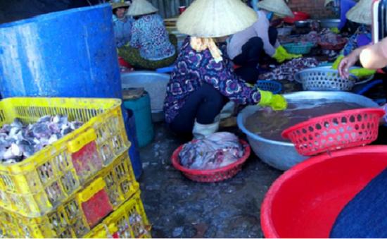 Đình chỉ 3 cơ sở sản xuất cá khô tại Bà Rịa - Vũng Tàu