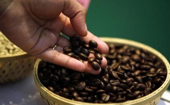 Lễ hội cà phê ở Yemen