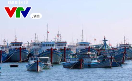 Thừa Thiên Huế hỗ trợ hơn 10 tỷ đồng cho tàu cá hoạt động