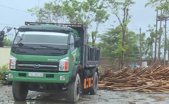 Doanh nghiệp hỗ trợ thu mua gỗ gãy đổ sau bão