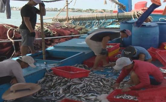 Ngư dân Thừa Thiên-Huế được mùa vụ cá Nam