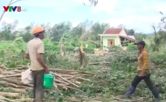 Hỗ trợ nông dân khắc phục thiệt hại vùng cây công nghiệp