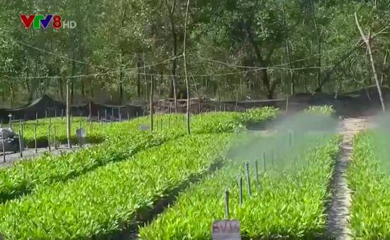 Hiệu quả trồng rừng từ bầu ươm bằng phế liệu hữu cơ
