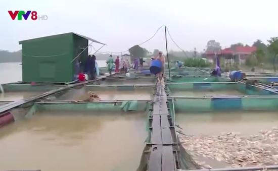 Thừa Thiên - Huế: Người nuôi cá lồng chồng chất nợ nần vì lũ lụt