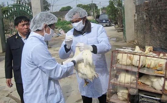 Các đợt dịch cúm A/H7N9 từ Trung Quốc