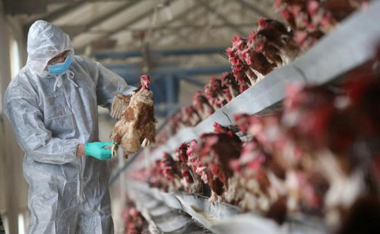 Trung Quốc tăng cường đối phó với dịch cúm A/H7N9