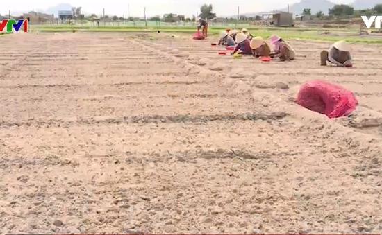 Biến đất cát bỏ hoang thành lợi thế