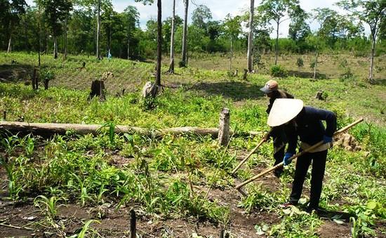 Khó khăn trong hỗ trợ đất ở, đất sản xuất cho hộ nghèo ở Gia Lai