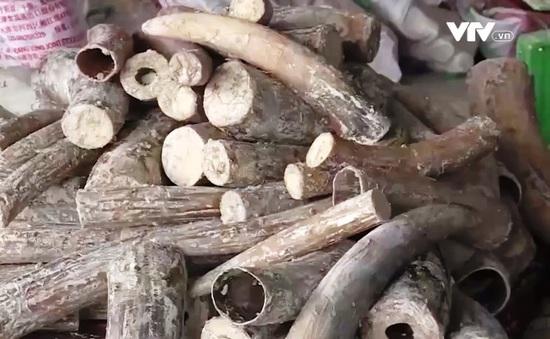 """""""Việt Nam rất nỗ lực phòng chống tội phạm buôn bán động vật hoang dã"""""""