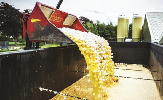 Ngừng bán trứng nhiễm hóa chất tại Hong Kong (Trung Quốc)