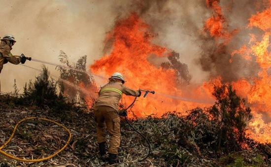 Cháy rừng ở châu Âu diễn biến phức tạp