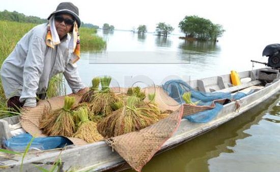 Thái Lan bình ổn giá gạo