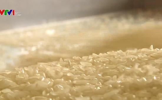 ST24 lọt top 3 gạo ngon nhất thế giới - Cơ hội nâng tầm gạo Việt