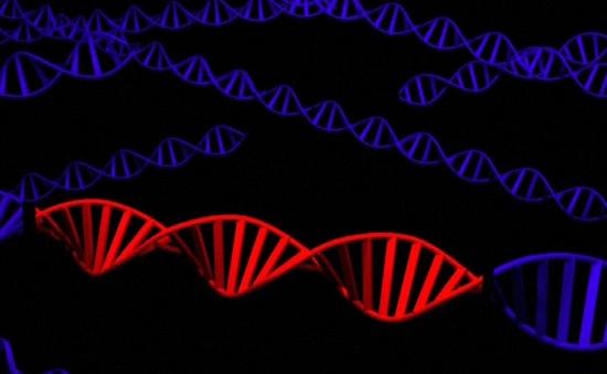 Các nhà khoa học Mỹ thành công biến đổi gen của phôi người