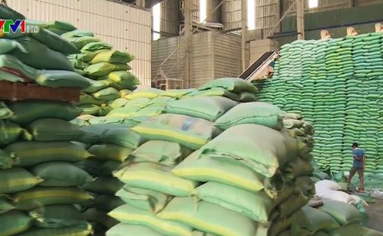 Giá gạo phục hồi mạnh ở thị trường nội địa và xuất khẩu