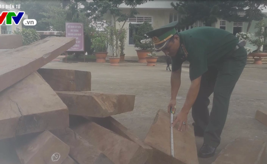 Quảng Trị: Phát hiện vụ vận chuyển gỗ trái phép qua biên giới