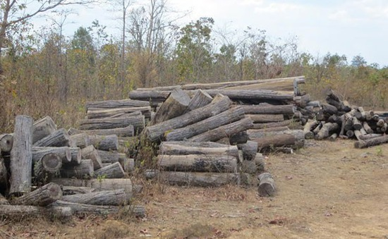 Kiểm điểm tập thể, cá nhân trong vụ khai thác gỗ trái phép tại Đắk Lắk