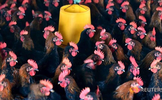 Nguy cơ cúm A/H7N9 lây lan mạnh tại Trung Quốc