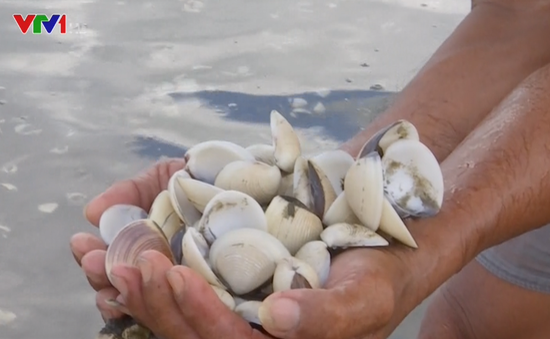Hải sản chết bất thường ở Kiên Giang có thể do tảo nở hoa