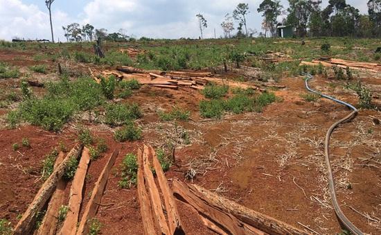 Đăk Nông: Kiến nghị điều tra vụ hơn 53ha rừng bị phá