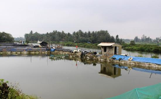 ĐBSCL: Người dân ồ ạt nuôi tôm thẻ chân trắng trong vùng nước ngọt
