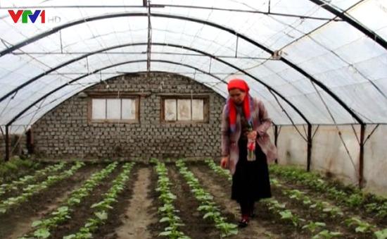 Uzbekistan hỗ trợ nông dân nuôi gà trồng chanh