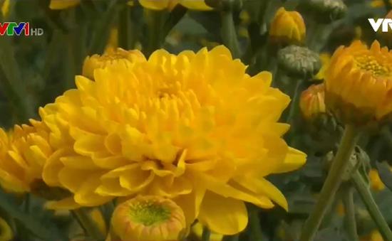 Bán hoa kiểu ký gửi - nông dân chịu thiệt