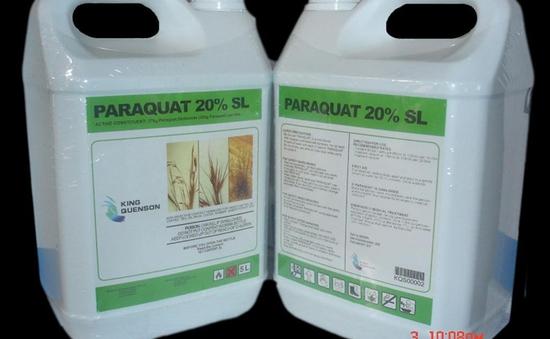 Gia tăng số ca tự tử nhập viện do ngộ độc thuốc diệt cỏ Paraquat