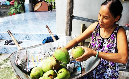 Bọ trĩ gây thiệt hại nặng ở vùng trồng xoài Cam Lâm, Khánh Hòa