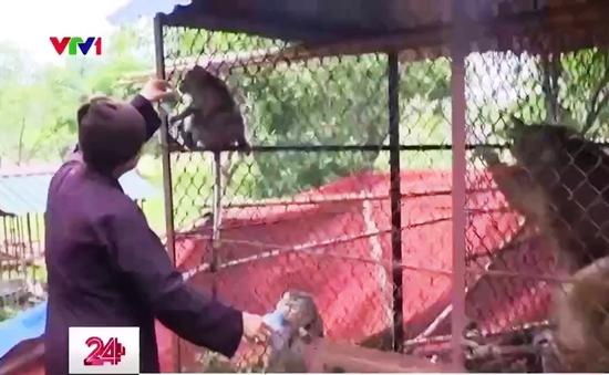 Việc tử tế: Mái nhà đặc biệt của những chú khỉ