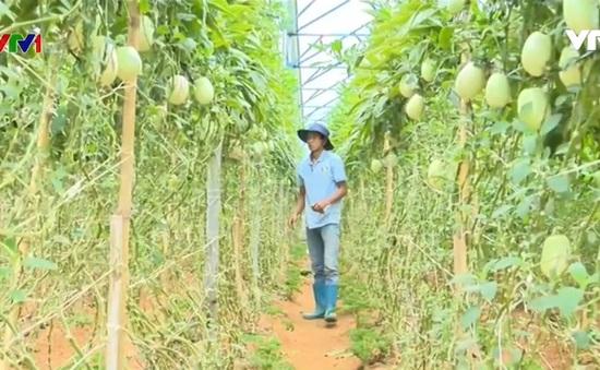 Thanh niên lập nghiệp bằng nông sản độc đáo
