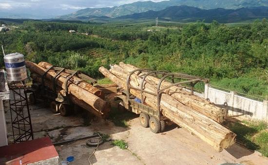Kon Tum: Bắt giữ hai xe vận chuyển gỗ lậu từ Lào về Việt Nam