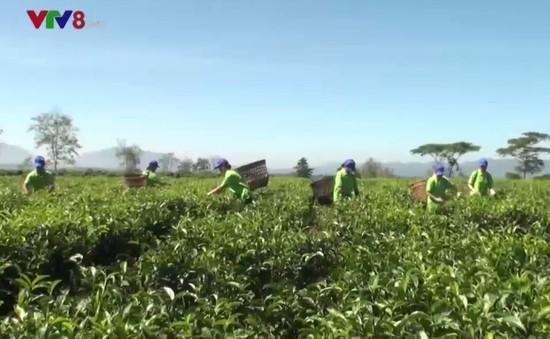 Nông sản Lâm Đồng tìm hướng tiếp cận thị trường phía Bắc