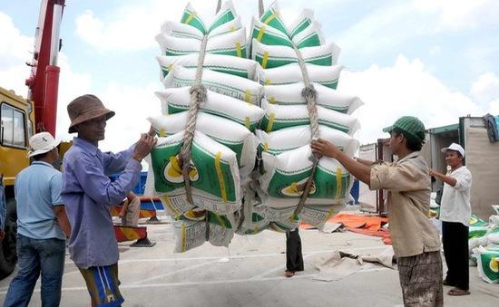 Giá lúa gạo miền Bắc tăng mạnh