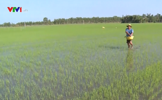 Sản xuất lúa Thu Đông gặp khó do mưa nhiều, lũ sớm