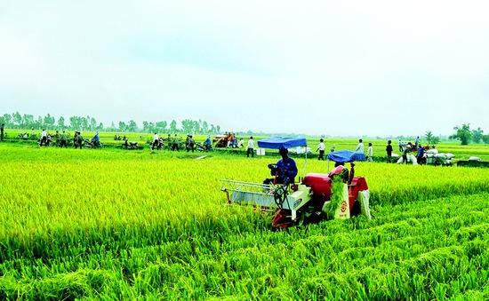 Chính phủ phê duyệt đề án tái cơ cấu nông nghiệp