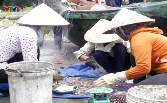 Nam Định trúng đậm mực biển