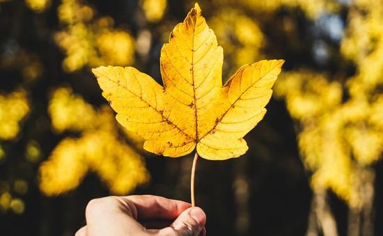 Vì sao mùa thu là thời điểm tuyệt vời với người yêu du lịch?