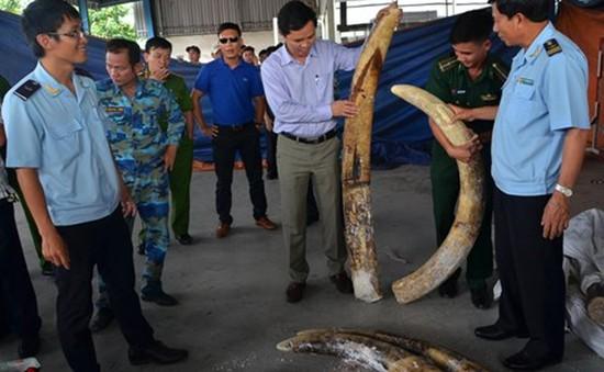 Xử lý nghiêm vụ hải quan đánh tráo ngà voi