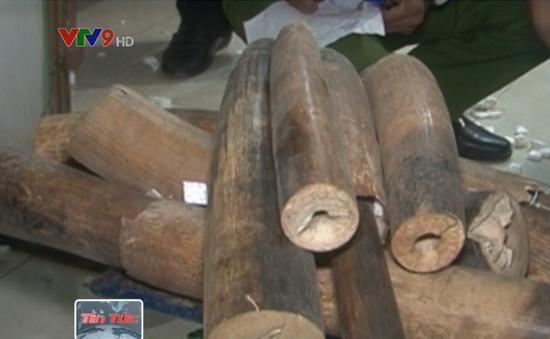 1,5 tấn hàng bị bắt quả tang ở Bạc Liêu là ngà voi thật