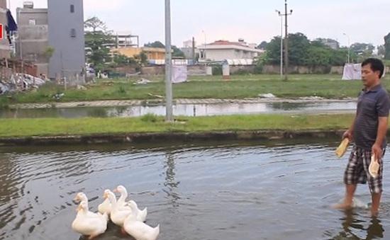 Khu dân cư quanh năm ngập nước tại Hà Nội