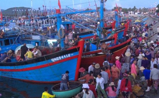 Ngư dân Quảng Ngãi trúng đậm ở vùng biển Hoàng Sa