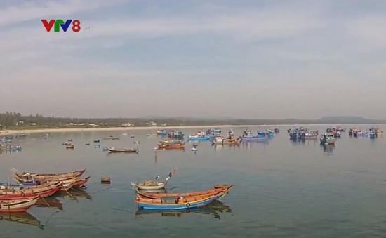 Ngư dân Quảng Ngãi chưa được hỗ trợ giảm tổn thất sau khai thác