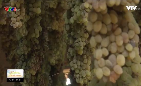 Nghề sản xuất nho khô ở Afghanistan