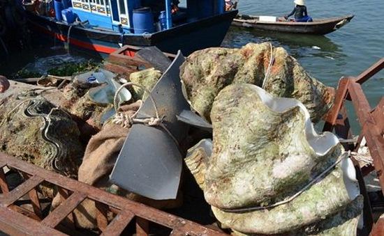 Phát hiện 50 tấn vỏ sò tai tượng quý hiếm tại Bình Thuận