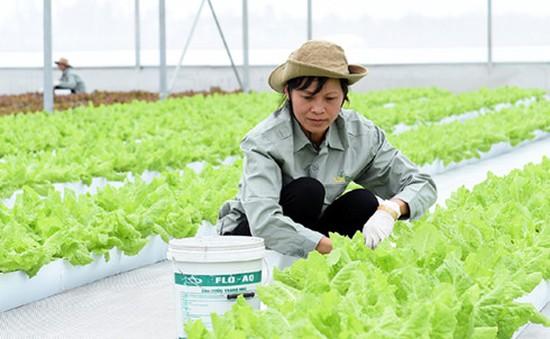 Long An: Đầu tư khoảng 1.300 tỷ đồng sản xuất nông nghiệp ứng dụng công nghệ cao