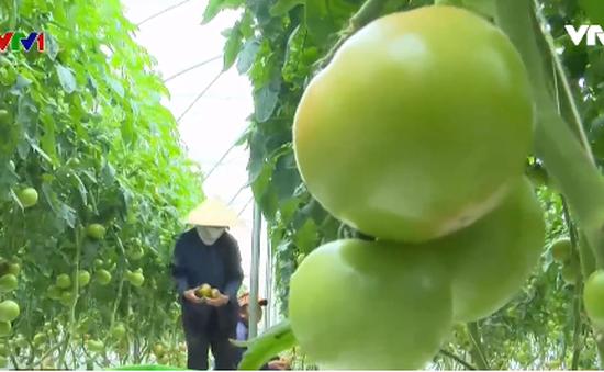 Đã giải ngân 33.000 tỷ đồng cho sản xuất nông nghiệp công nghệ cao