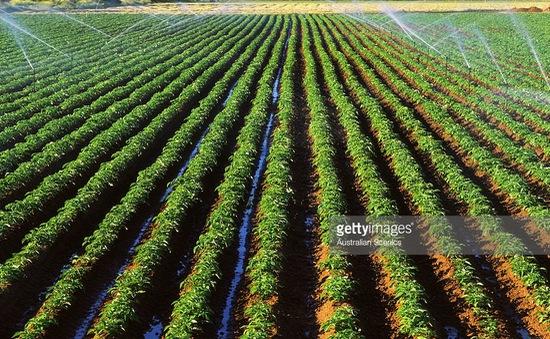 Trung Quốc đẩy mạnh đầu tư vào nông nghiệp Australia